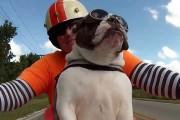 Μηχανόβιο Bulldog χαιρετάει τους περαστικούς και απολαμβάνει την βόλτα του