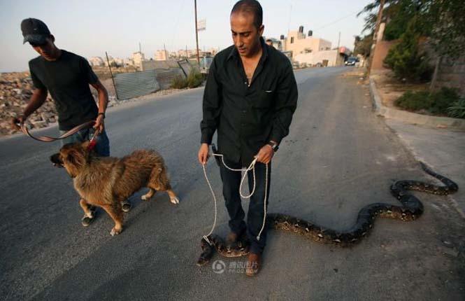 Πακιστανός έβγαλε για μια ασυνήθιστη βόλτα το εξωτικό του κατοικίδιο (5)