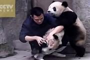 Panda αρνούνται να πάρουν το φάρμακο τους με ξεκαρδιστικό τρόπο