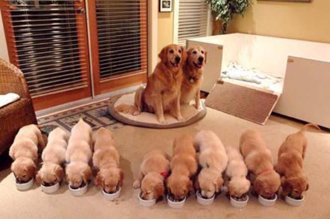 Περήφανοι γονείς του ζωικού βασιλείου (1)