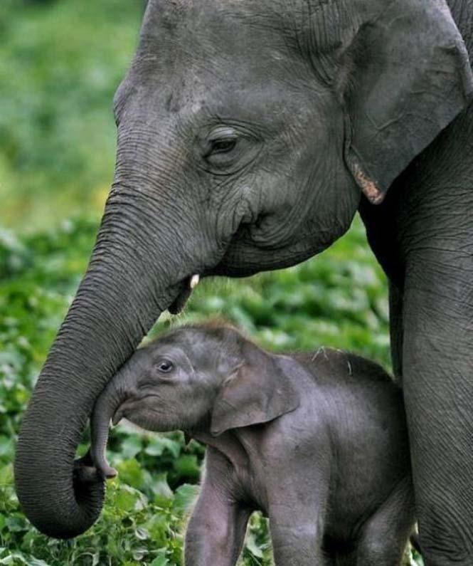 Περήφανοι γονείς του ζωικού βασιλείου (11)