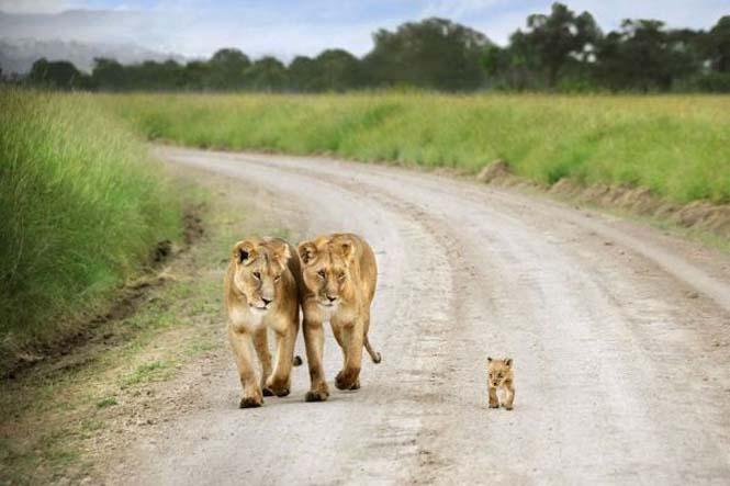 Περήφανοι γονείς του ζωικού βασιλείου (15)