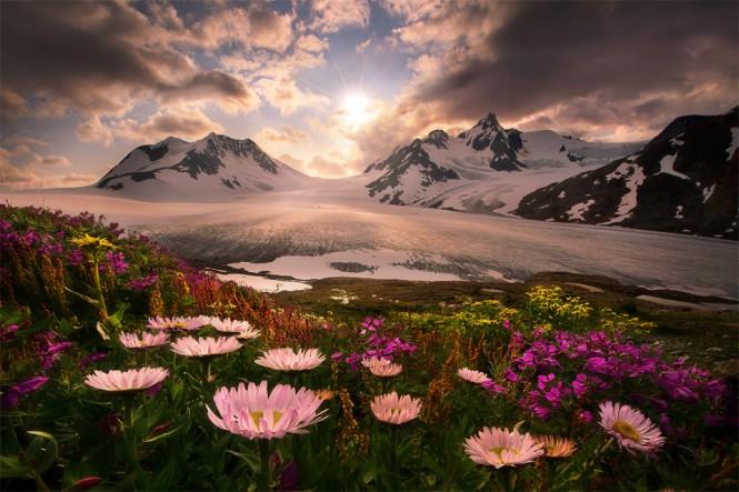 Ανθισμένα λουλούδια με φόντο τα παγωμένα βουνά της Αλάσκας | Φωτογραφία της ημέρας