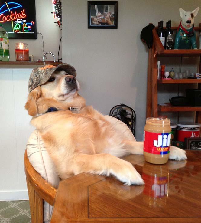 Αυτός ο σκύλος δεν έχει ιδέα τι κάνει (1)