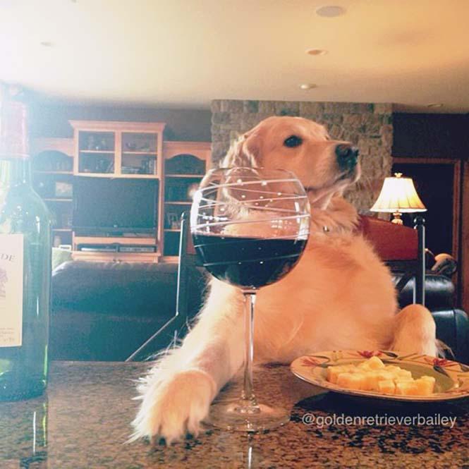 Αυτός ο σκύλος δεν έχει ιδέα τι κάνει (4)