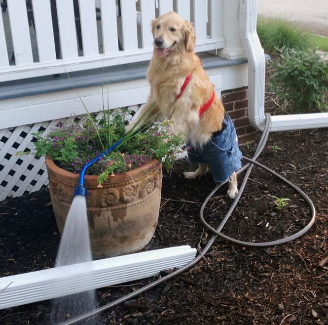 Αυτός ο σκύλος δεν έχει ιδέα τι κάνει (5)