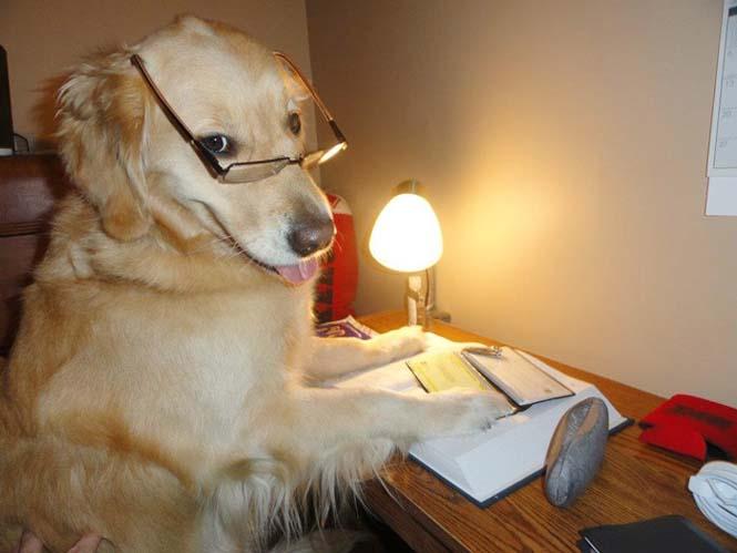 Αυτός ο σκύλος δεν έχει ιδέα τι κάνει (9)