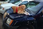 Αυτός ο σκύλος δεν έχει ιδέα τι κάνει (14)