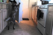 Ο σκύλος που φέρνει την μπύρα από το ψυγείο