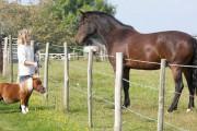 Το άλογο μινιατούρα που νομίζει πως είναι σκύλος
