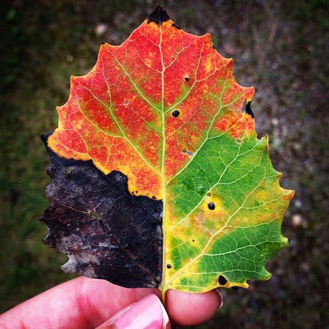 Όλο το χρωματικό φάσμα του Φθινοπώρου σε εντυπωσιακές φωτογραφίες (3)