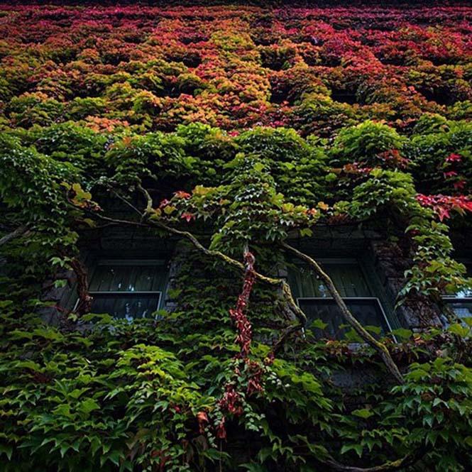Όλο το χρωματικό φάσμα του Φθινοπώρου σε εντυπωσιακές φωτογραφίες (4)