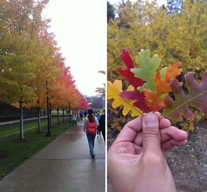 Όλο το χρωματικό φάσμα του Φθινοπώρου σε εντυπωσιακές φωτογραφίες (5)