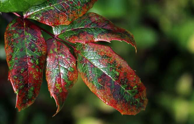 Όλο το χρωματικό φάσμα του Φθινοπώρου σε εντυπωσιακές φωτογραφίες (7)