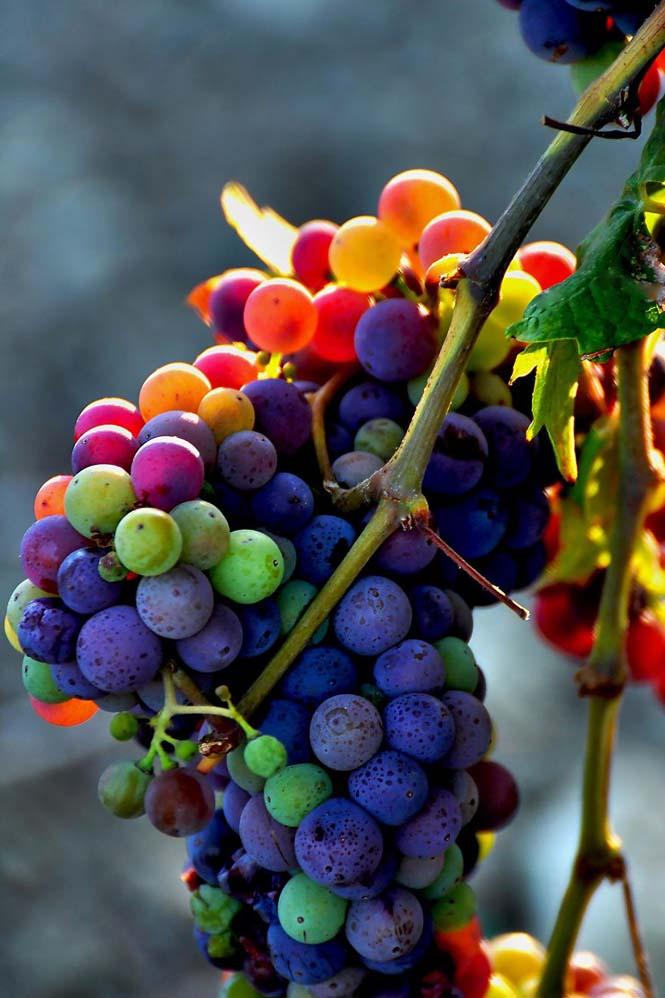 Όλο το χρωματικό φάσμα του Φθινοπώρου σε εντυπωσιακές φωτογραφίες (9)