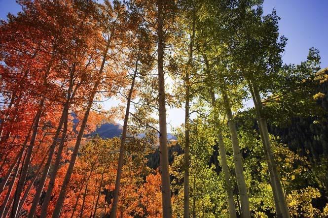 Όλο το χρωματικό φάσμα του Φθινοπώρου σε εντυπωσιακές φωτογραφίες (10)