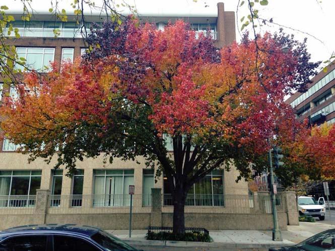 Όλο το χρωματικό φάσμα του Φθινοπώρου σε εντυπωσιακές φωτογραφίες (11)
