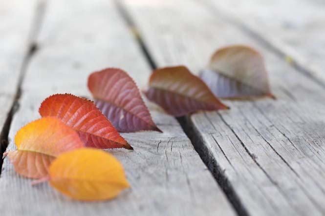 Όλο το χρωματικό φάσμα του Φθινοπώρου σε εντυπωσιακές φωτογραφίες (14)