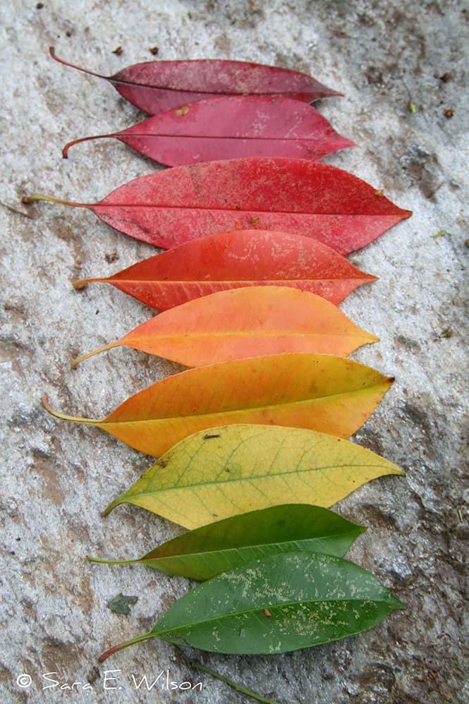 Όλο το χρωματικό φάσμα του Φθινοπώρου σε εντυπωσιακές φωτογραφίες (17)