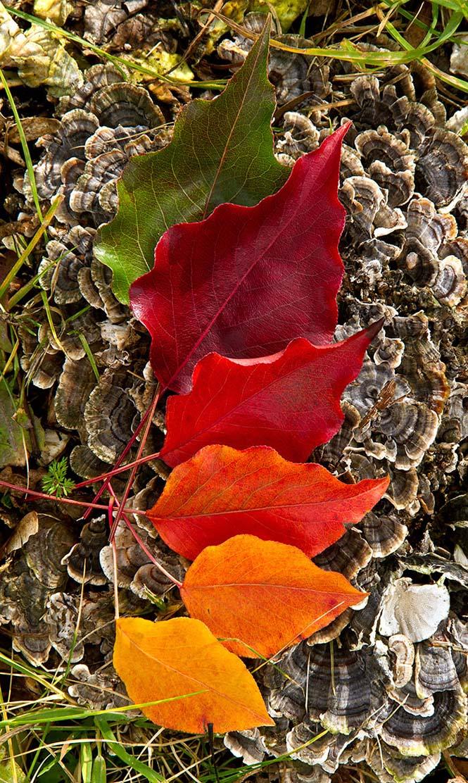 Όλο το χρωματικό φάσμα του Φθινοπώρου σε εντυπωσιακές φωτογραφίες (18)