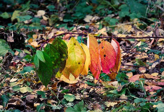 Όλο το χρωματικό φάσμα του Φθινοπώρου σε εντυπωσιακές φωτογραφίες (19)