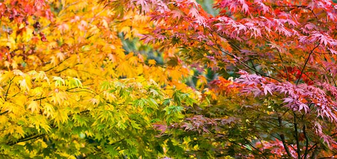 Όλο το χρωματικό φάσμα του Φθινοπώρου σε εντυπωσιακές φωτογραφίες (25)