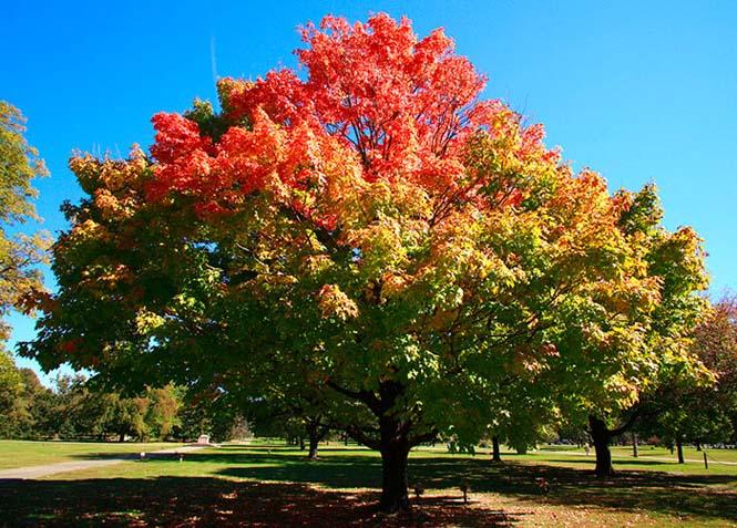 Όλο το χρωματικό φάσμα του Φθινοπώρου σε εντυπωσιακές φωτογραφίες (26)