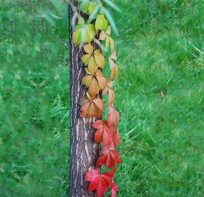 Όλο το χρωματικό φάσμα του Φθινοπώρου σε εντυπωσιακές φωτογραφίες (27)