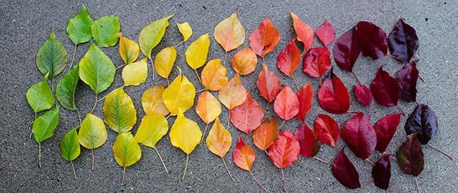 Όλο το χρωματικό φάσμα του Φθινοπώρου σε εντυπωσιακές φωτογραφίες (28)