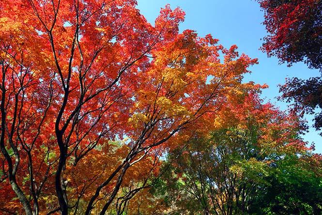 Όλο το χρωματικό φάσμα του Φθινοπώρου σε εντυπωσιακές φωτογραφίες (29)