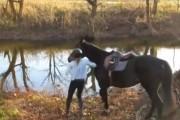 Άλογο συναντά νερό για πρώτη φορά