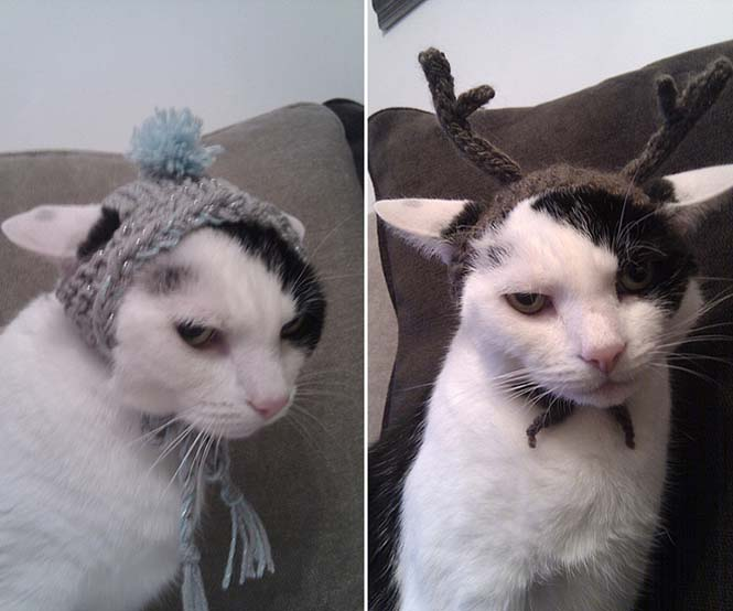 Γάτες που μισούν την στολή που τους φόρεσαν (1)