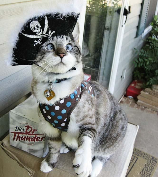 Γάτες που μισούν την στολή που τους φόρεσαν (2)