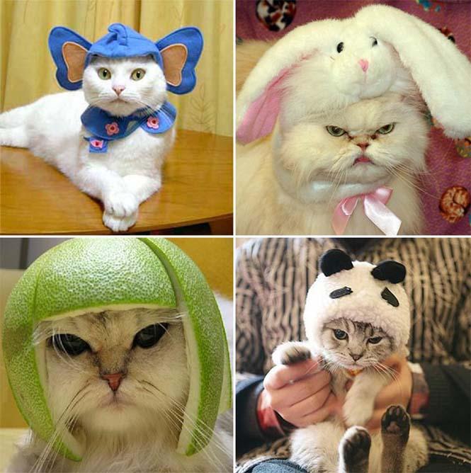 Γάτες που μισούν την στολή που τους φόρεσαν (3)