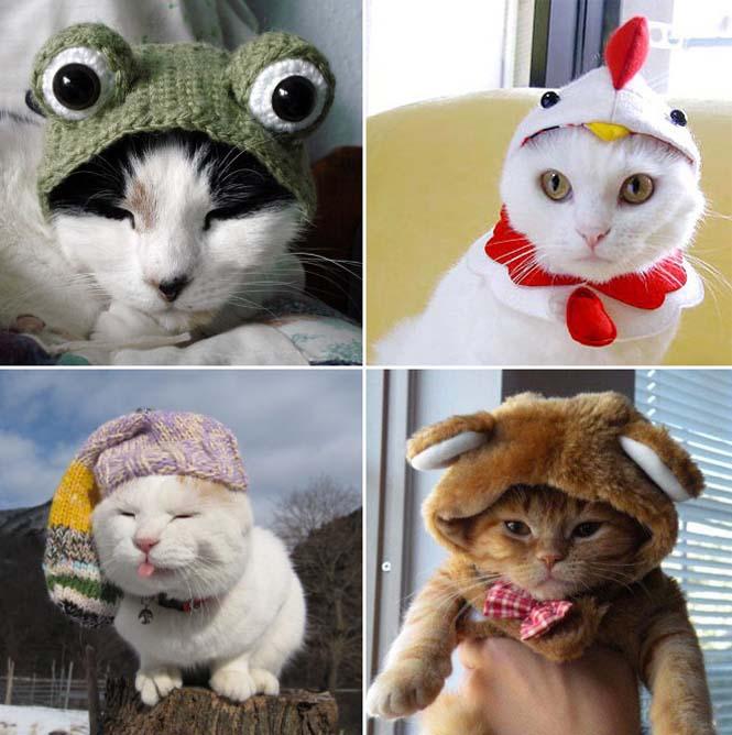Γάτες που μισούν την στολή που τους φόρεσαν (4)