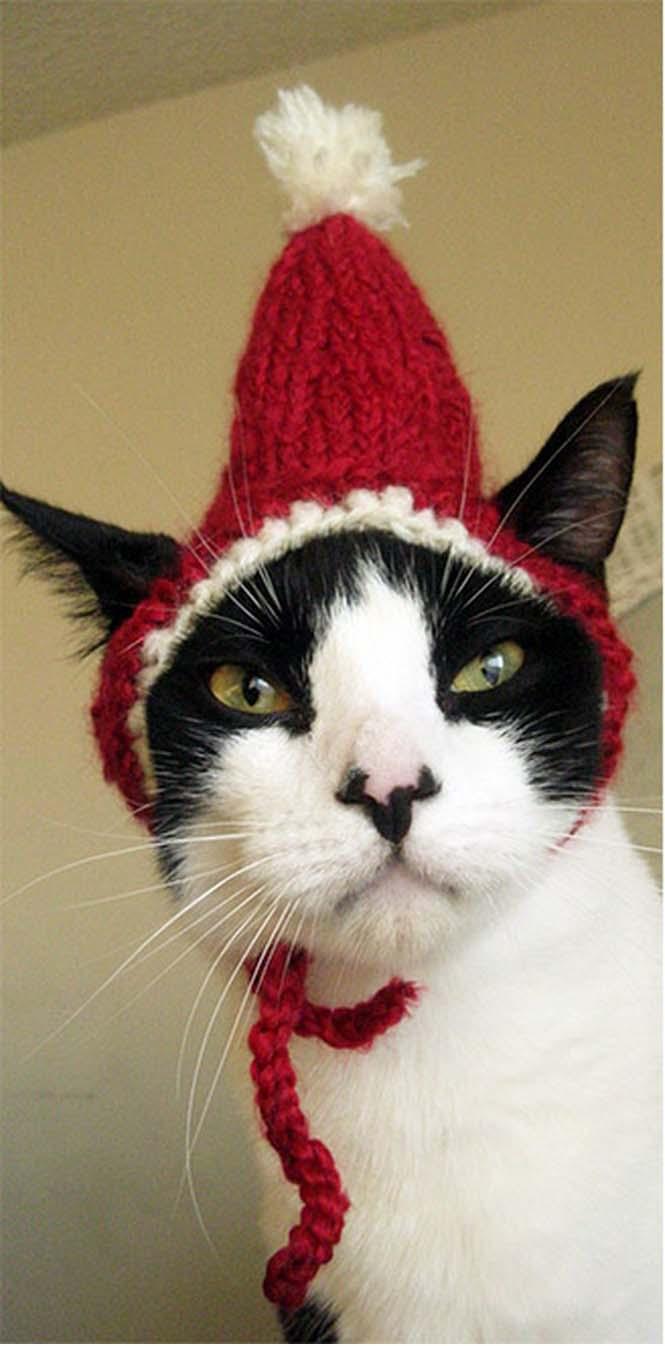 Γάτες που μισούν την στολή που τους φόρεσαν (5)