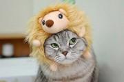 Γάτες που μισούν την στολή που τους φόρεσαν (6)