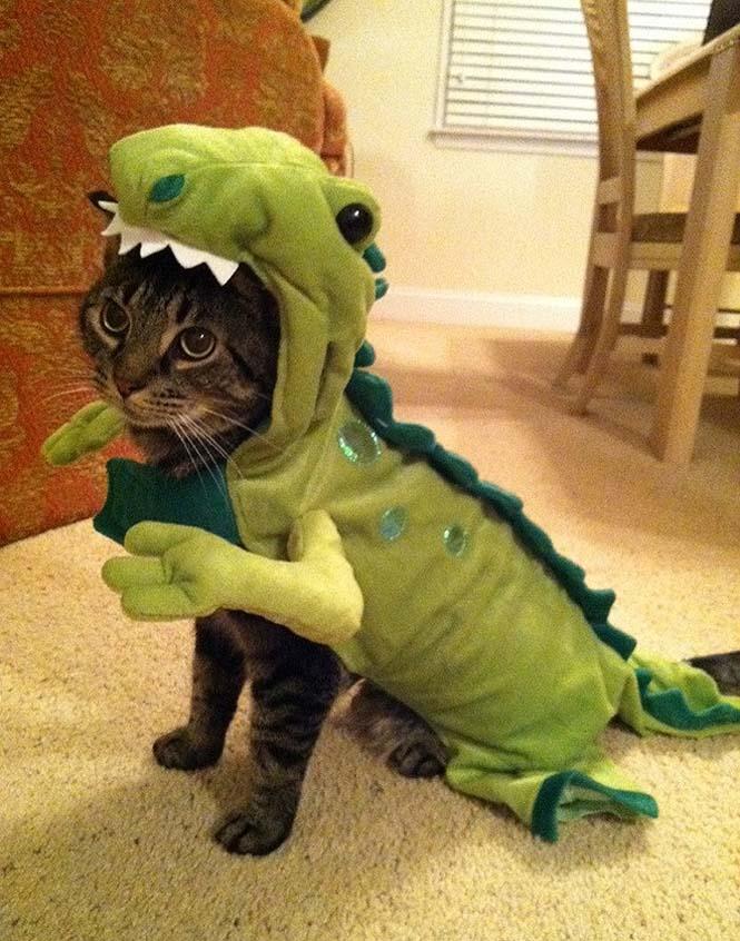 Γάτες που μισούν την στολή που τους φόρεσαν (8)