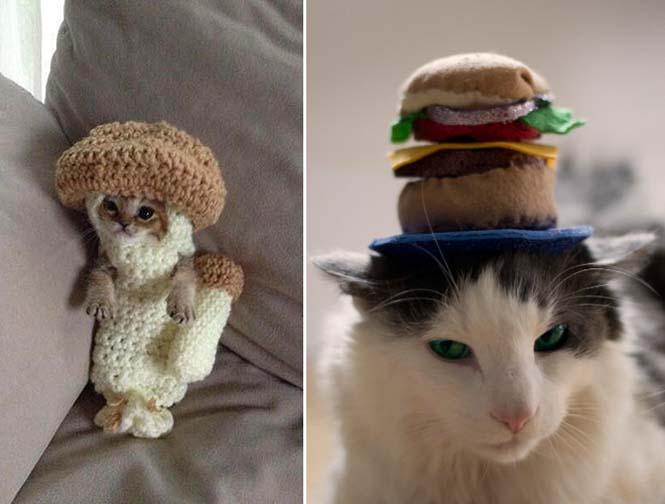 Γάτες που μισούν την στολή που τους φόρεσαν (9)