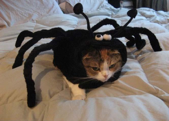 Γάτες που μισούν την στολή που τους φόρεσαν (10)