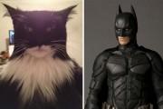 Γάτες που μοιάζουν με κάτι άλλο (2)