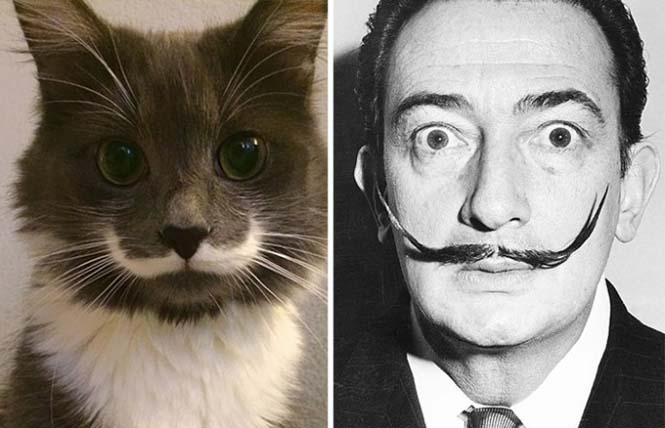 Γάτες που μοιάζουν με κάτι άλλο (4)