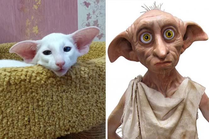Γάτες που μοιάζουν με κάτι άλλο (6)