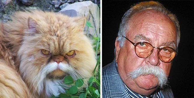 Γάτες που μοιάζουν με κάτι άλλο (9)
