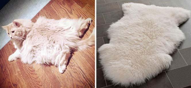 Γάτες που μοιάζουν με κάτι άλλο (11)