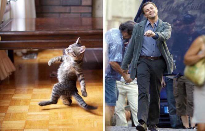 Γάτες που μοιάζουν με κάτι άλλο (12)