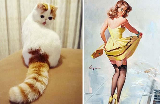 Γάτες που μοιάζουν με κάτι άλλο (14)