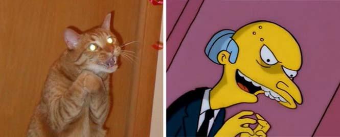Γάτες που μοιάζουν με κάτι άλλο (17)
