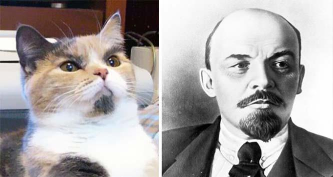 Γάτες που μοιάζουν με κάτι άλλο (19)