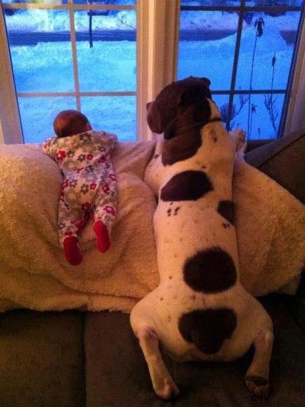 Μωρά με σκύλους: Ένας ακαταμάχητος συνδυασμός (6)